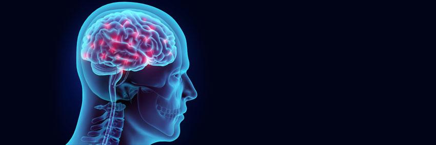 bannière cerveau humain